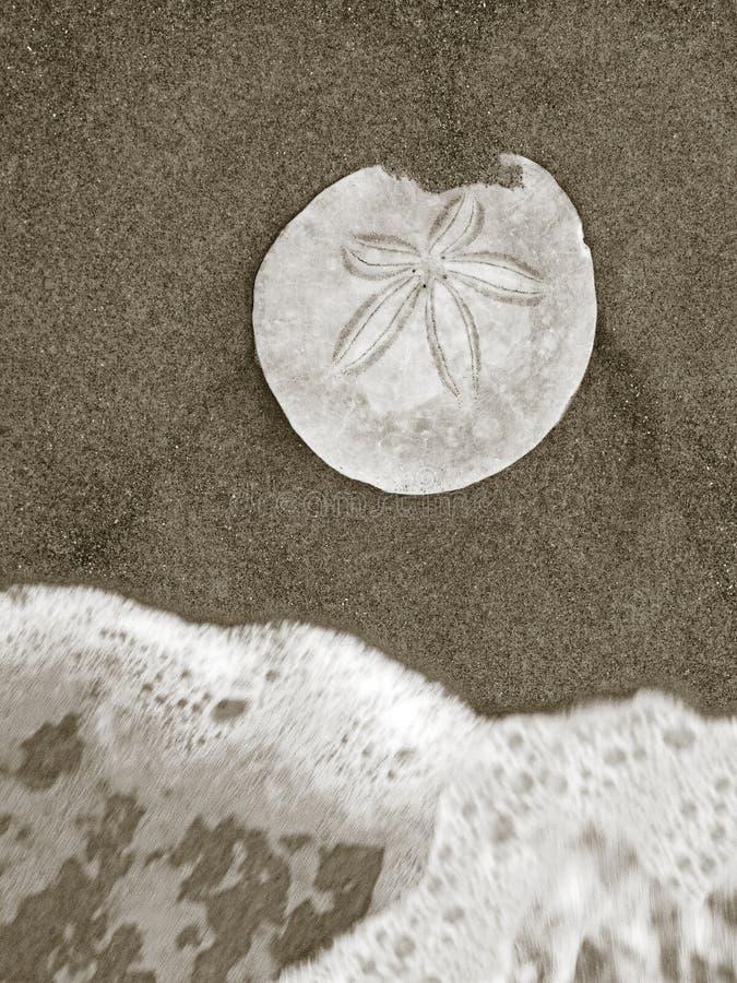 梳发现的海滩 库存图片