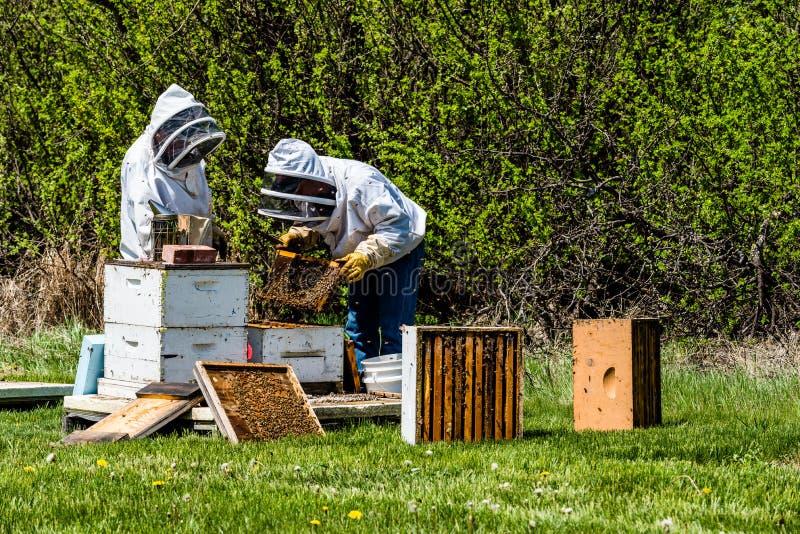 检查从蜂箱的无法认出的蜂农巢盘子 库存照片