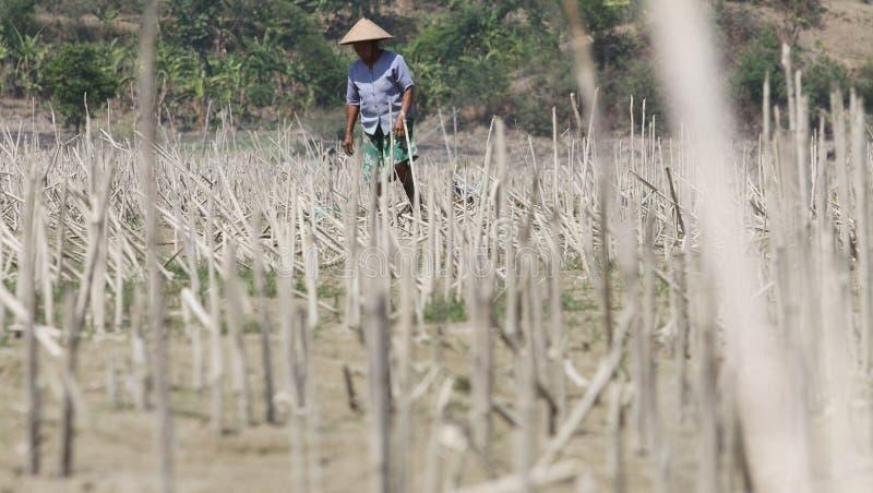 检查农夫的情况村庄tanamanya的Klewor B 免版税库存照片