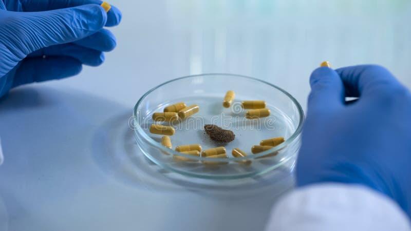 检查医疗药片的内容科学家,假劣医学控制 库存照片