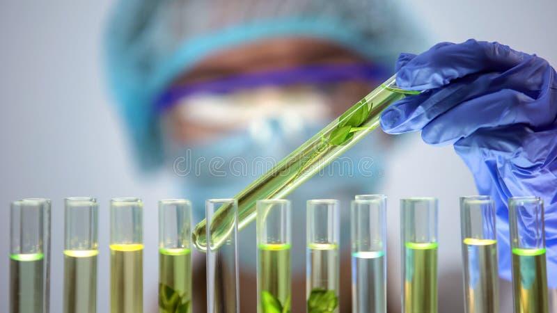 检查在试管,杀虫剂影响农业的生物学家植物样品 免版税库存图片