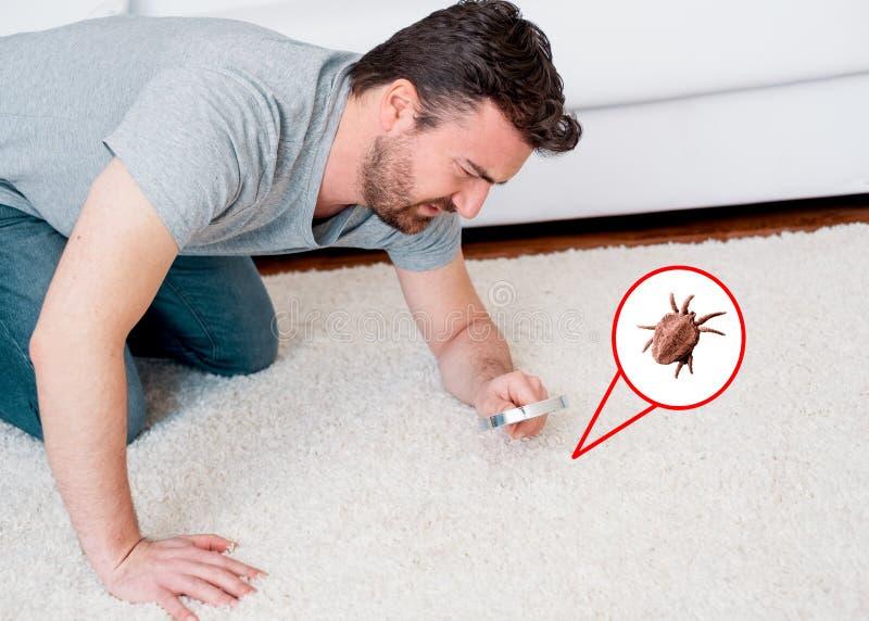 检查地毯尘土小蜘蛛和臭虫寄生生物的人 库存照片
