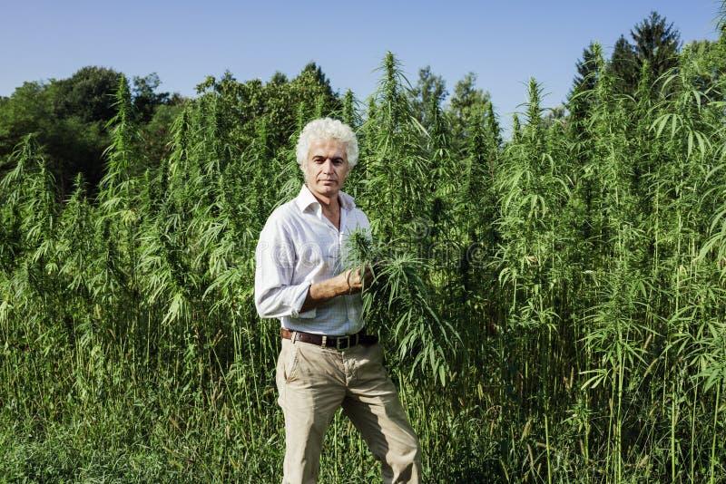 检查大麻植物的确信的企业家 免版税库存照片