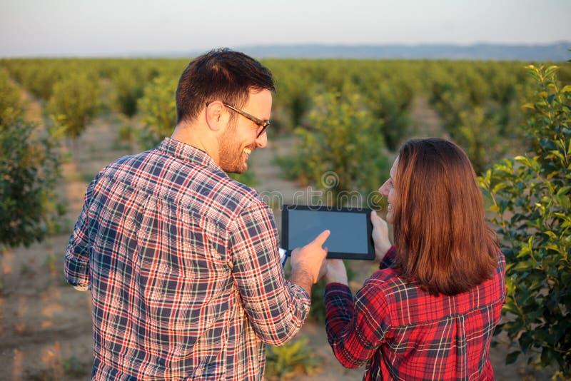 检查年轻果树园的微笑的年轻男性和女性农艺师和农夫,使用片剂 图库摄影