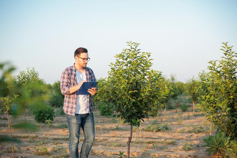 检查年轻树的严肃的年轻男性农艺师或农夫在果树园 拿着剪贴板和填装数据 图库摄影