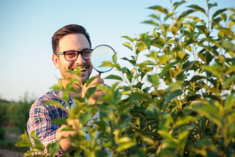 检查年轻树的愉快的年轻男性农艺师或农夫在果树园 使用放大镜,寻找寄生生物 库存图片
