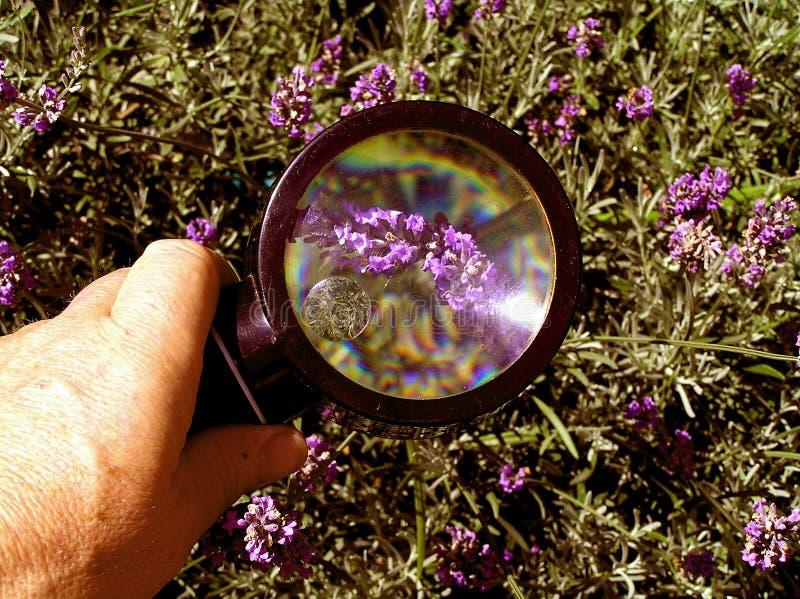Download 检查庄稼 库存图片. 图片 包括有 淡紫色, 识别, 上司, 确定, 种类, 扩大化, 气味, 庄稼, 室外 - 184711