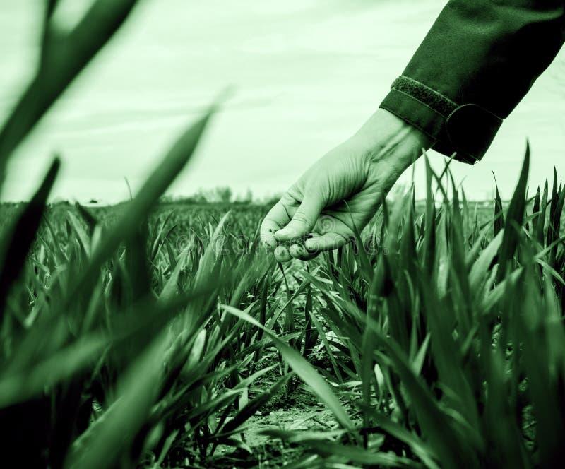 检查收获的年轻农业妇女生物学家 免版税库存照片