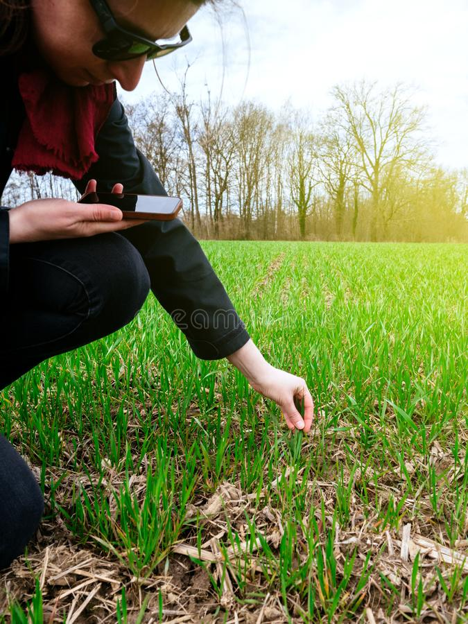 检查收获的年轻农业妇女生物学家sunflar 免版税库存图片