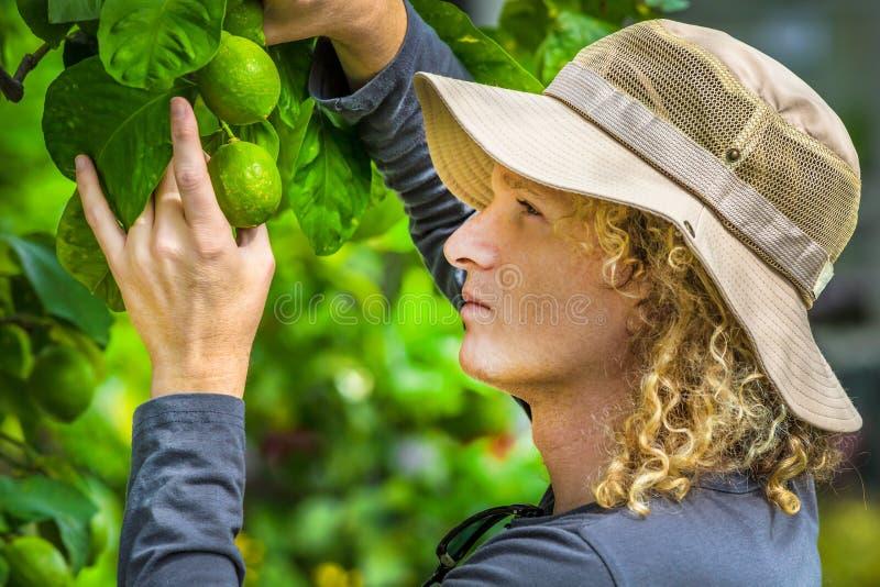 检查柠檬的农夫 免版税图库摄影