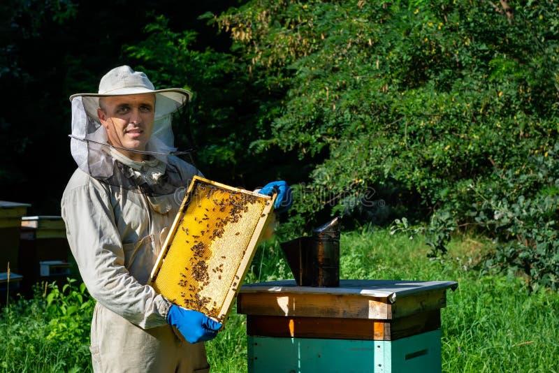 检查框架的防护工作服的蜂农在蜂房 蜂农拿着一个蜂窝用在他的新鲜的蜂蜜 免版税库存照片