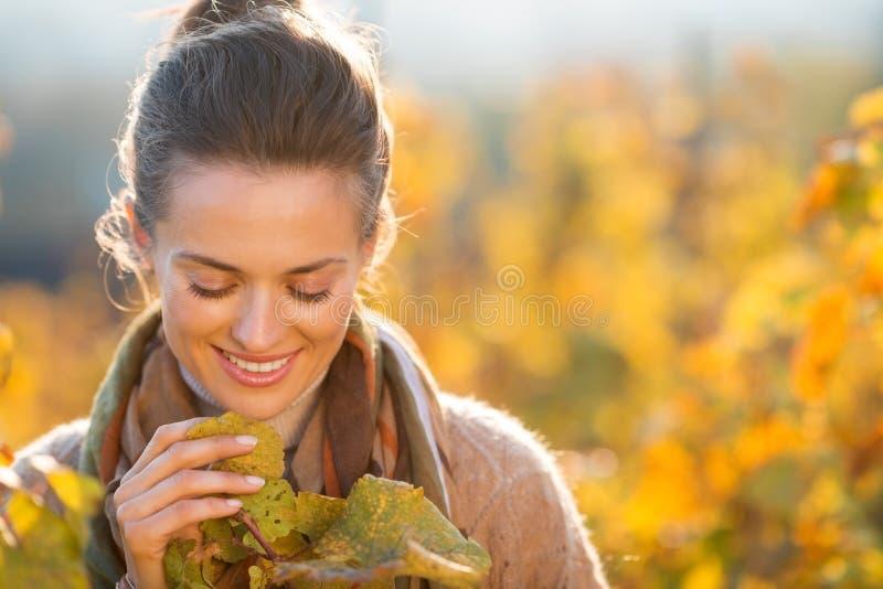 检查葡萄树的妇女种葡萄并酿酒的人在秋天葡萄园里 图库摄影
