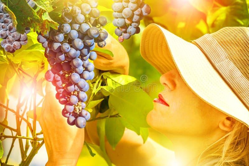检查葡萄的农夫 图库摄影