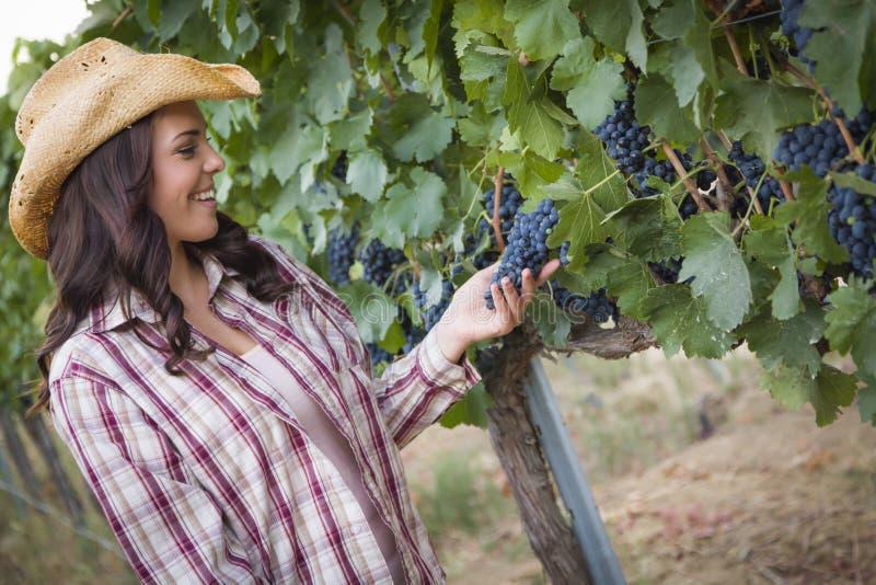 检查葡萄的美丽的女性农夫在葡萄园里 免版税库存图片