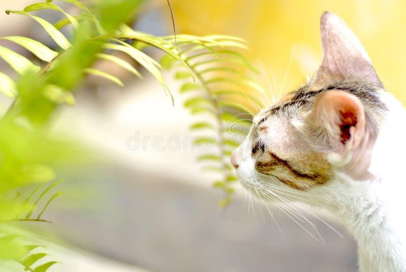 检查蕨叶子的猫 免版税库存图片