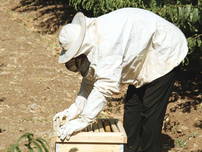 检查蜂房的蜂农 库存照片