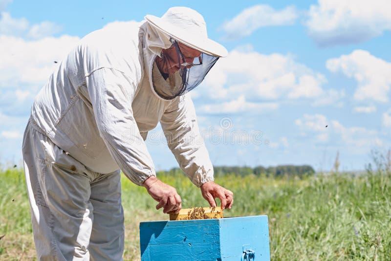 检查蜂房箱子的资深蜂农 库存图片