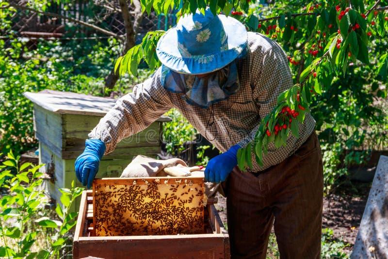 检查蜂箱保证蜂殖民地的健康或收集蜂蜜的蜂农 免版税库存照片