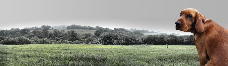 检验有薄雾的早晨 免版税图库摄影