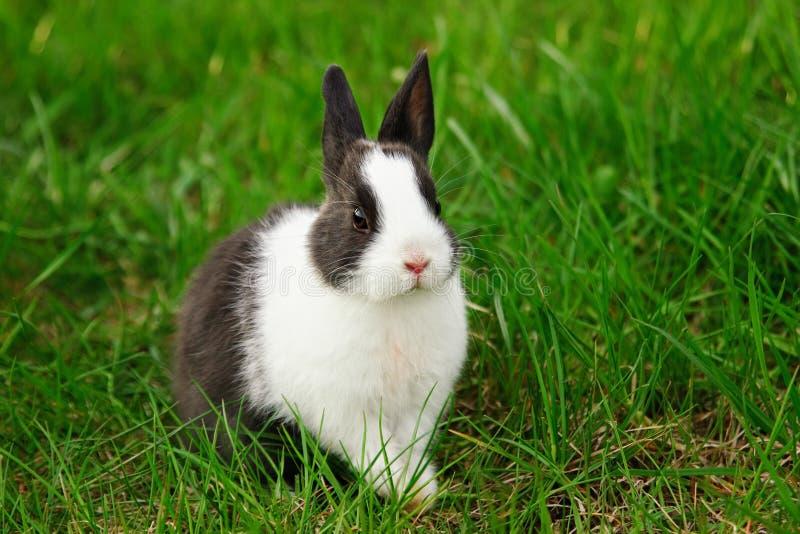 海豚水力视频800_533天天酷跑动物井宝壁纸之心兔子图片