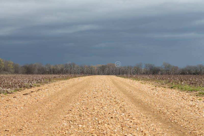 棉籽领域在密西西比 免版税库存照片