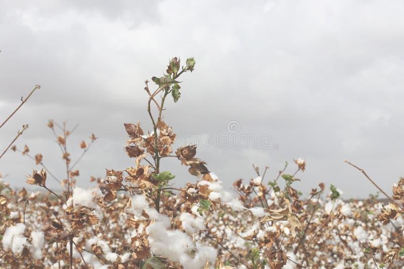 棉花被归档在秋天背景 库存照片