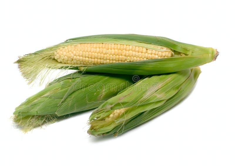 棒子空白查出的蔬菜 免版税库存照片