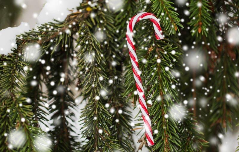 棒棒糖在杉树分支的圣诞节玩具 库存图片