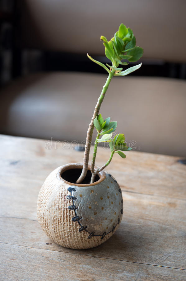 棒球花瓶和植物 免版税库存照片