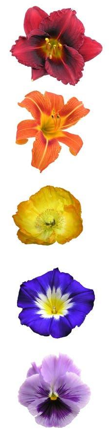 棒花卉彩虹垂直 免版税库存照片