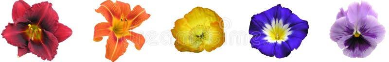 棒花卉彩虹 库存图片