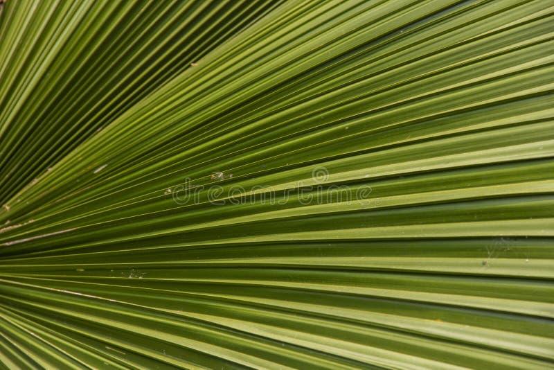 棕枝全日叶子 免版税库存图片