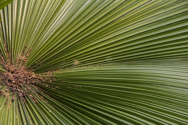 棕枝全日叶子2 免版税图库摄影