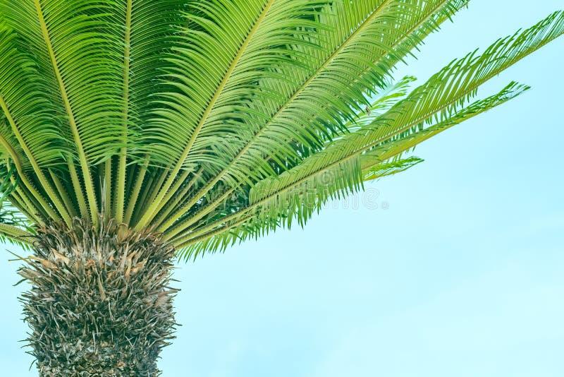 棕榈分支在上面上升了 免版税库存图片
