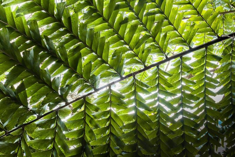 棕榈分支在阳光下 免版税库存图片