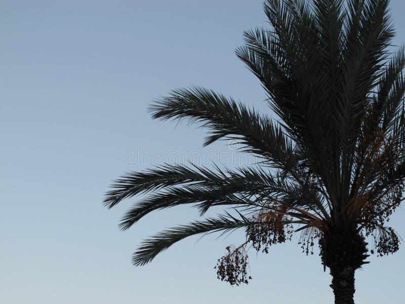 棕榈剪影 免版税库存图片