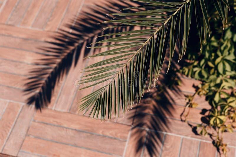 棕榈叶和阴影的特写镜头 夏天概念 E 抽象自然纹理 免版税库存图片