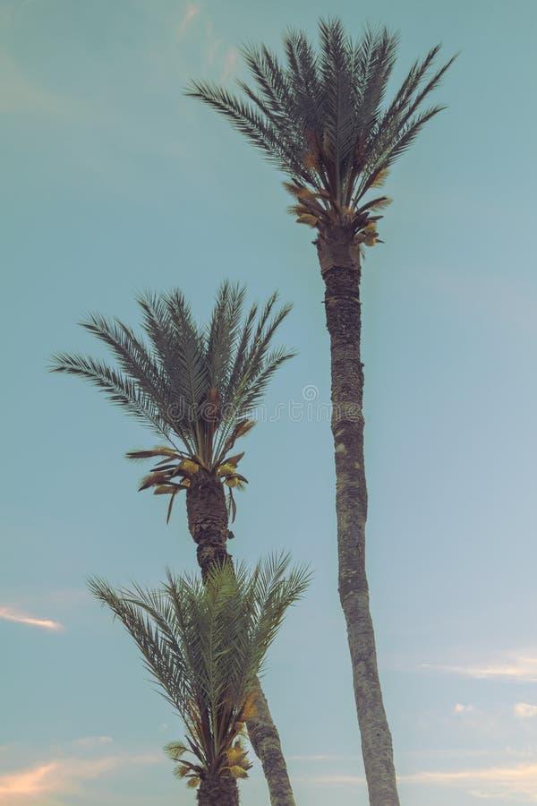 棕榈叶子 图库摄影