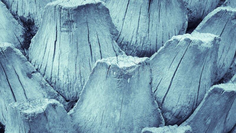 棕榈叶状体样式纹理背景蓝色口气 免版税库存照片