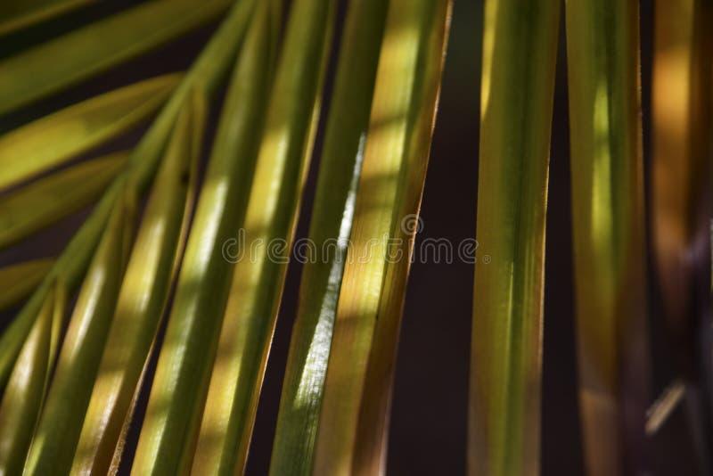 棕榈叶状体背景 免版税库存图片