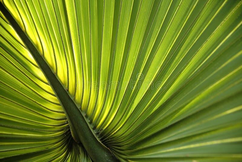 棕榈叶状体背景 免版税库存照片