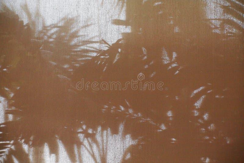 棕榈叶的抽象背景阴影树荫 库存照片