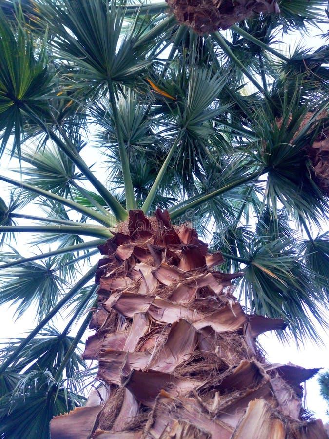 棕榈叶绿色背景 特写镜头棕榈树背景 库存图片