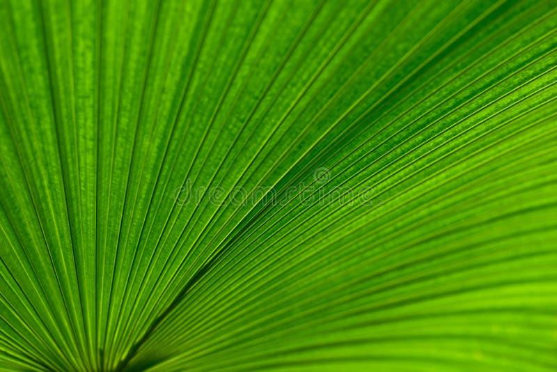 棕榈叶背景,抽象绿线纹理,绿色地方教育局 免版税库存照片