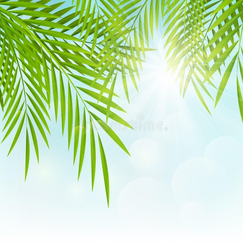 棕榈叶背景 向量例证
