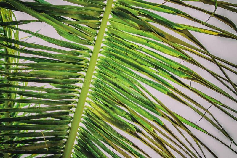 棕榈叶,抽象绿色纹理和自然本底接近的葡萄酒照片  库存图片