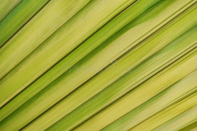 棕榈叶,绿色和黄色叶子,背景的美好的自然 库存图片