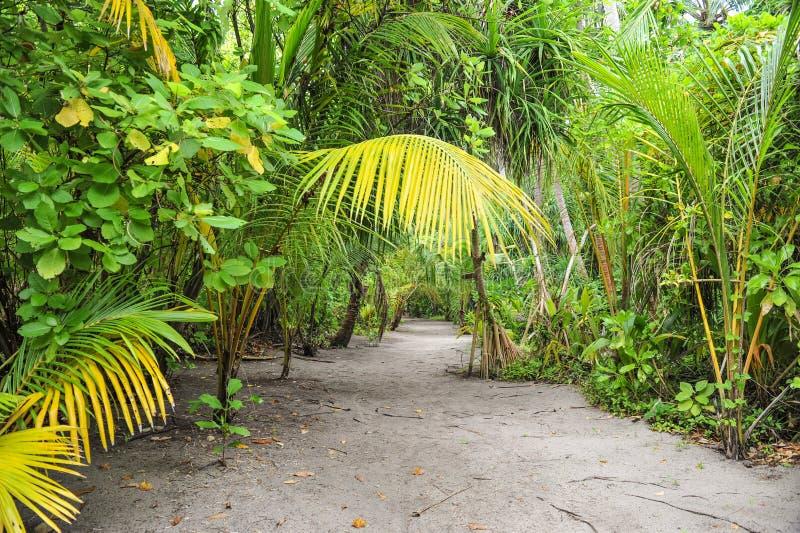 棕榈叶 在海岛上的热带森林在印度洋 潮湿热带密林美好的风景  热带的森林 库存照片