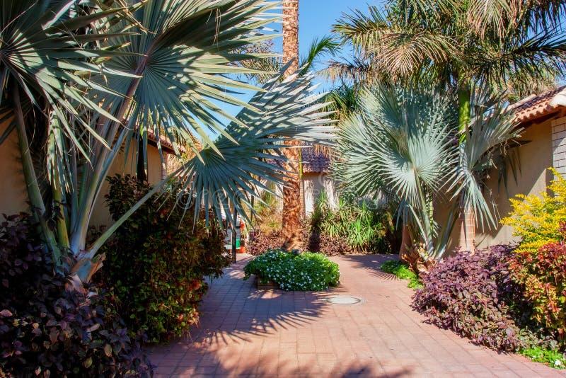 棕榈和别墅看法在热带旅馆 异乎寻常的假日概念 库存图片