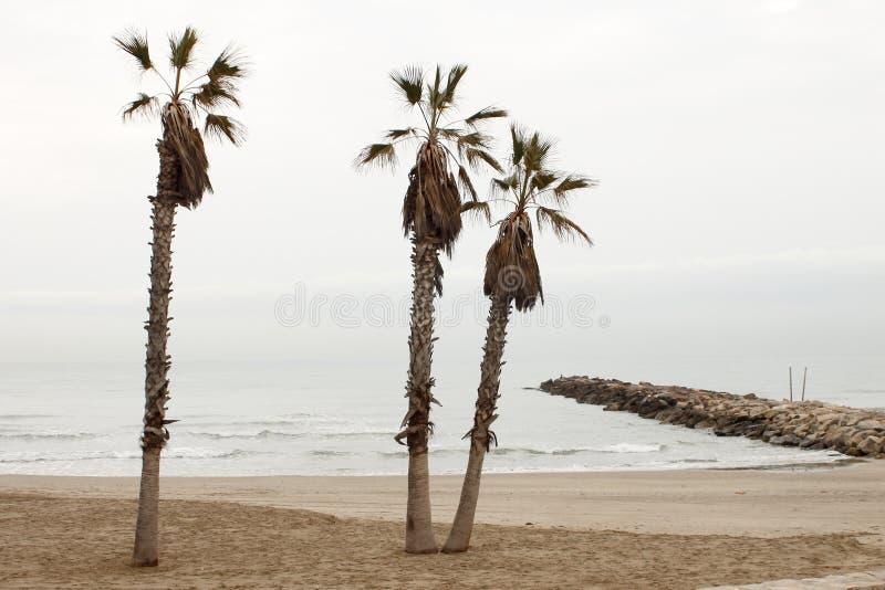 棕榈和峰顶在冬天 库存图片